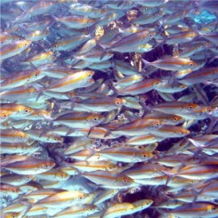school-vissen-3-300x300